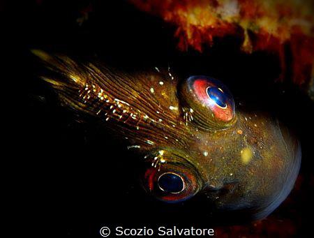 your eyes on mine by Scozio Salvatore