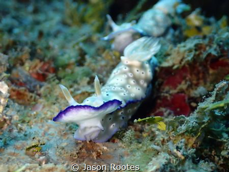 Nudi Train by Jason Rootes