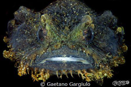 Mu mum said I am beautiful!!! by Gaetano Gargiulo
