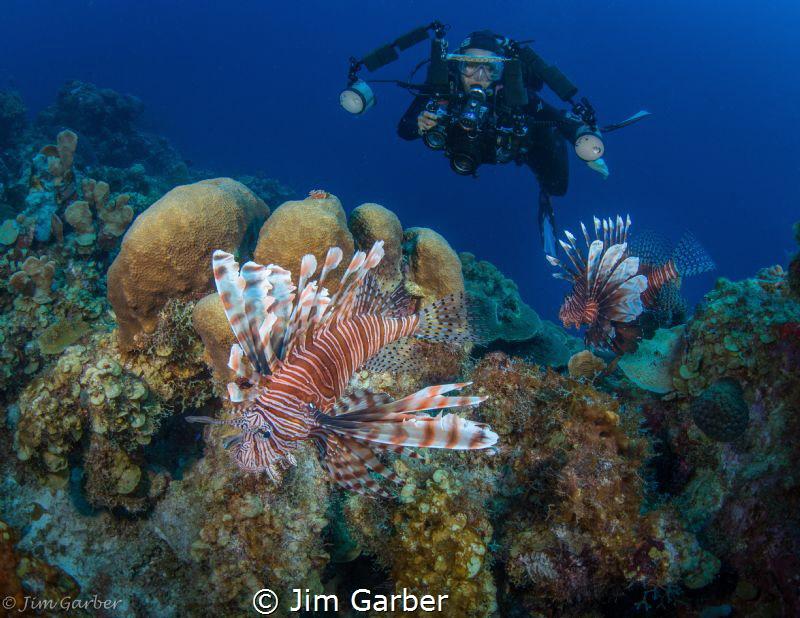 Lion Fish - Bonaire by Jim Garber
