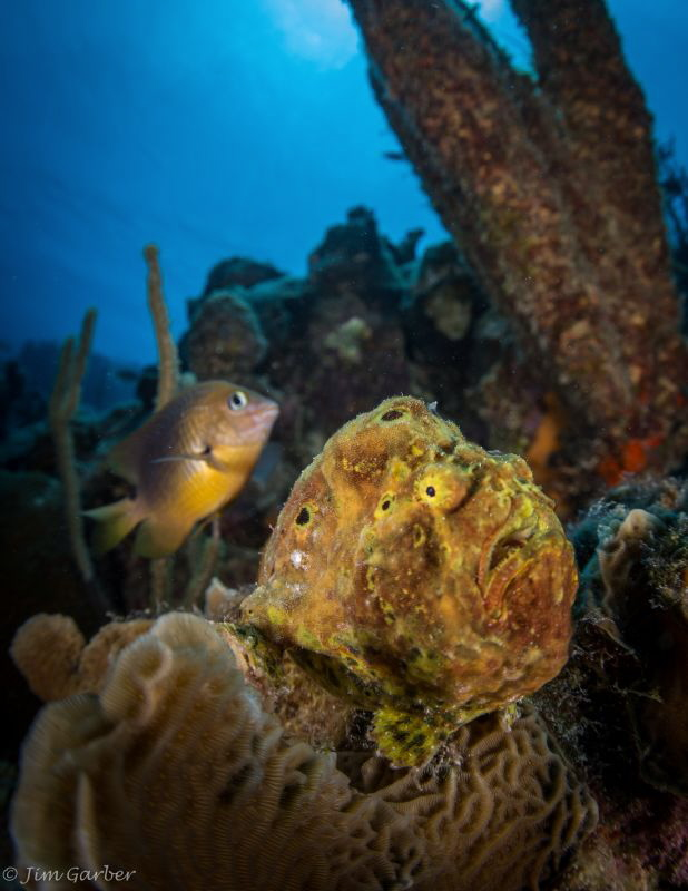 Frog Fish with his Damsel bodyguard by Jim Garber