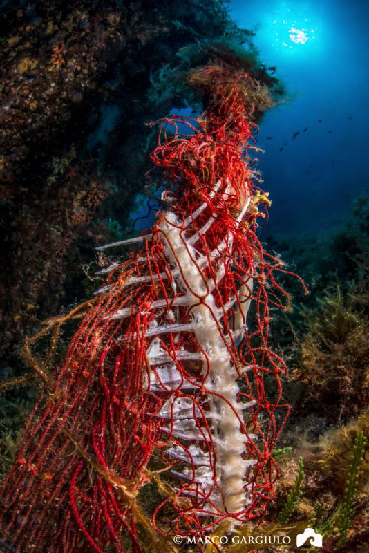 An abandoned fishing net that still fishing in the protec... by Marco Gargiulo