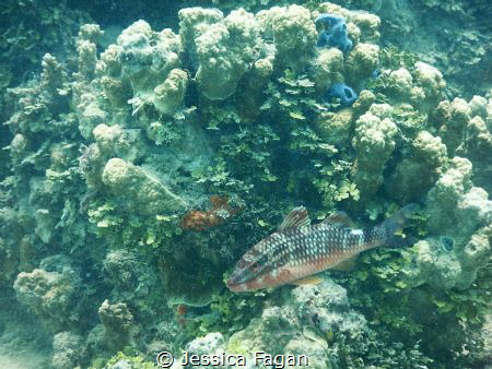 Fish trying to blend in with the coral. by Jessica Fagan