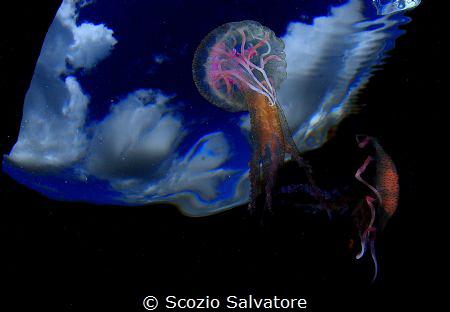 sea dancers by Scozio Salvatore