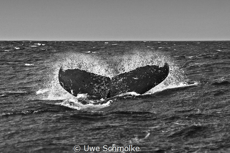 Humpback waving good bye by Uwe Schmolke