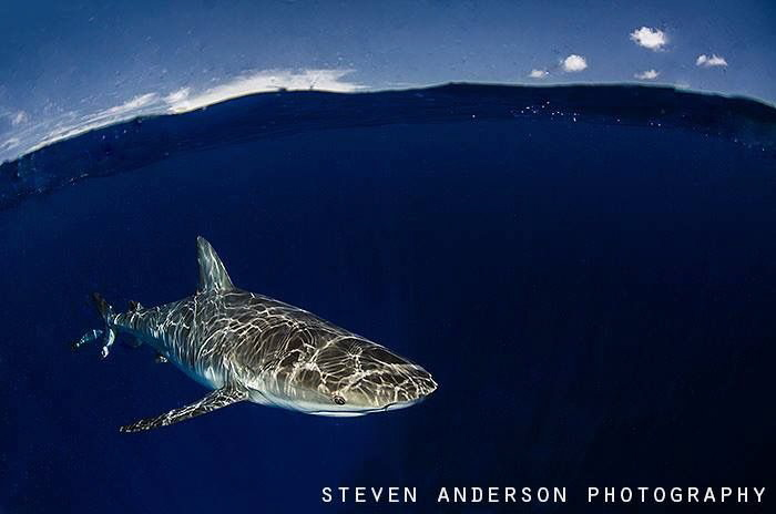 Reflections of a wave runner! by Steven Anderson