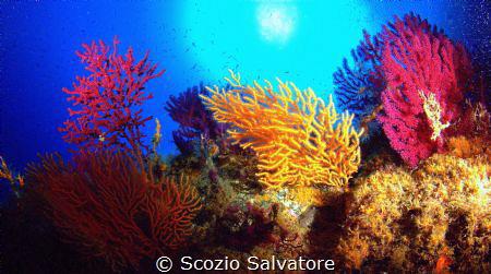 deep forest by Scozio Salvatore