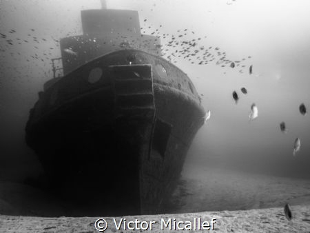 Tugboat Rozi was scuttled at Cirkewwa, an already popular... by Victor Micallef