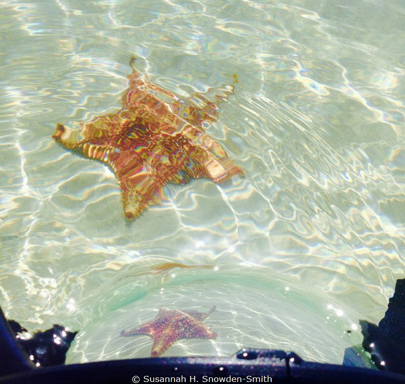 """""""Starfish Through The Lens""""  A starfish is seen both in... by Susannah H. Snowden-Smith"""