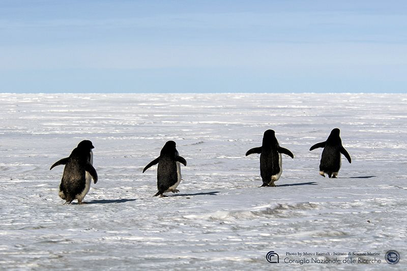 Running on the frozen sea by Marco Faimali (ismar-Cnr)