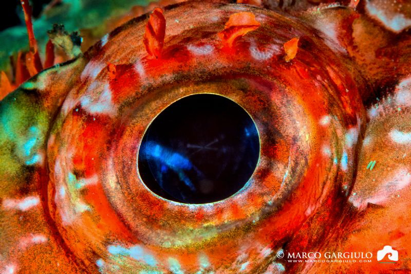 Scorpaena eye by Marco Gargiulo