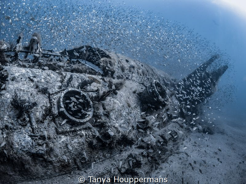 'Life In The Big City' - The wreck of the U352 off the co... by Tanya Houppermans