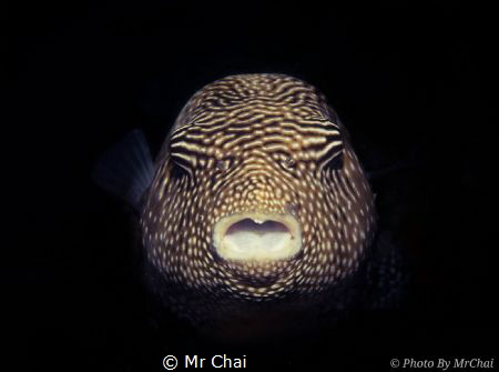 Hiding from the dark~