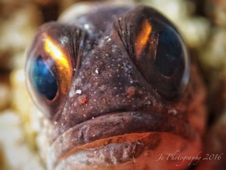 Jawfish by Khow Jin Chee