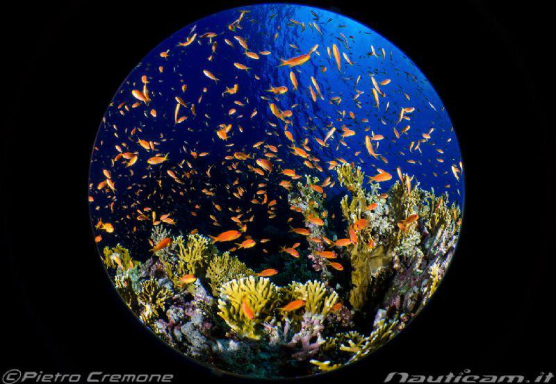 Fish Ball by Pietro Cremone