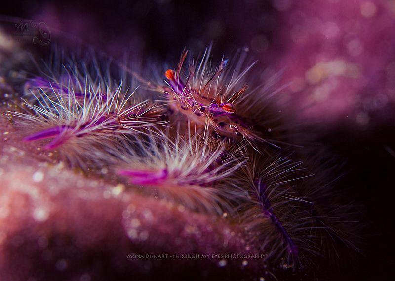 Pinkie by Mona Dienhart