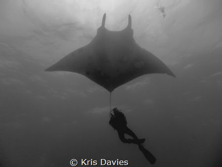 Close encounter with a giant pacific Manta Ray, taken at ... by Kris Davies