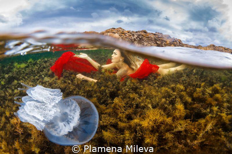 See in the Black sea by Plamena Mileva