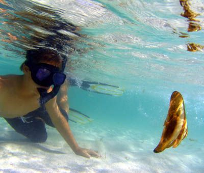 My son checking out a batfish in the shallows, Ningaloo Reef by Penny Murphy