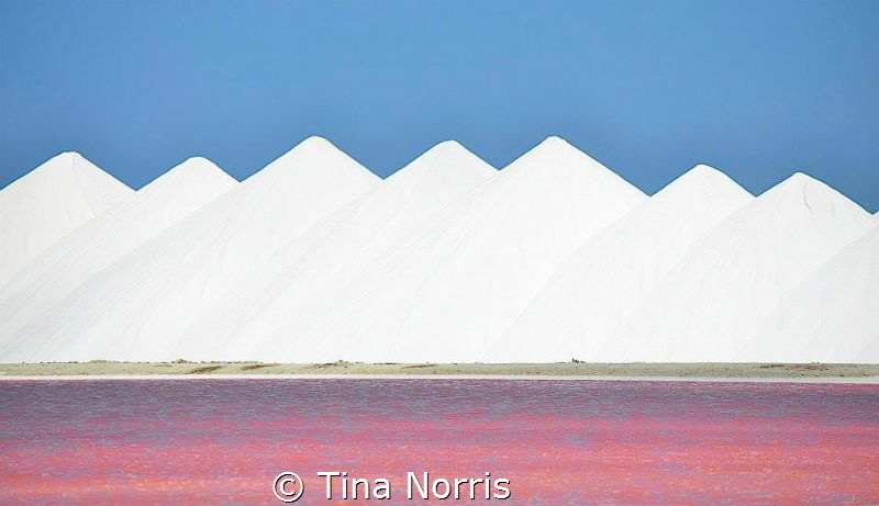 Pretty in Pink - Bonaire by Tina Norris