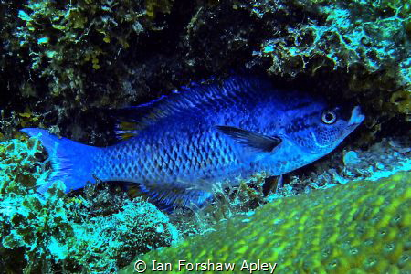 static fish by Ian Forshaw Apley