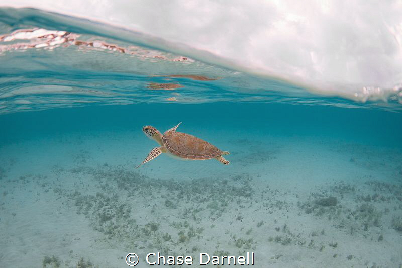 """Turtle Youth""