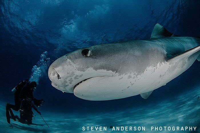 The healthy reefs of the Bahamas encourage the health of ... by Steven Anderson