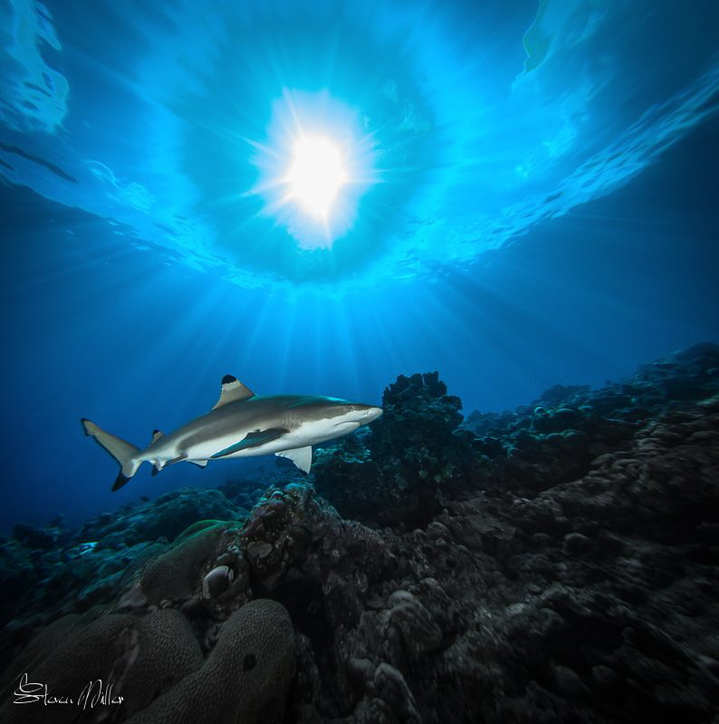 Blacktip Pass by Steven Miller