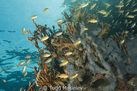 Reef scene in Milne bay Papua New Guinea by Todd Moseley