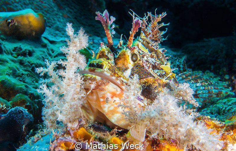 Stone fish near Bunaken Island by Mathias Weck