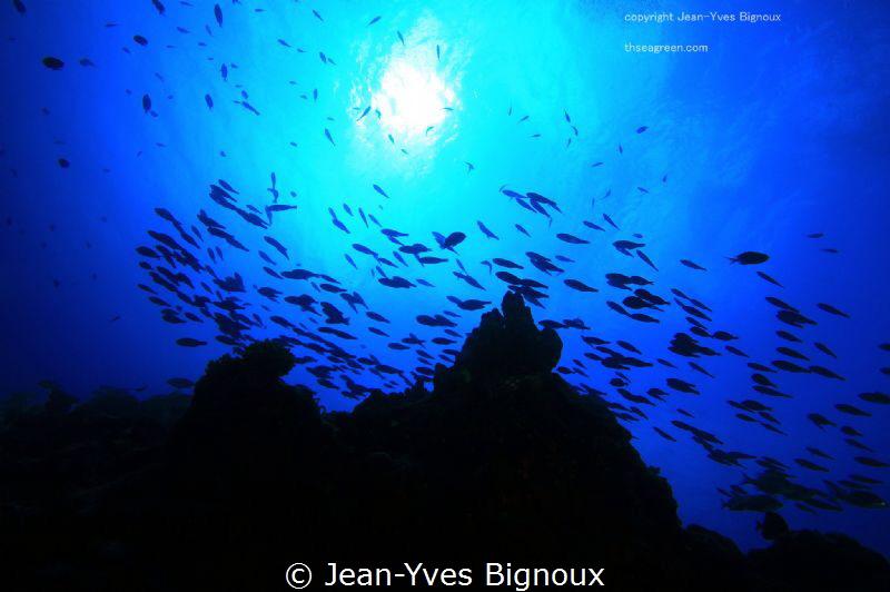 Coin De Mire ,Republic of Mauritius.9 metres by Jean-Yves Bignoux