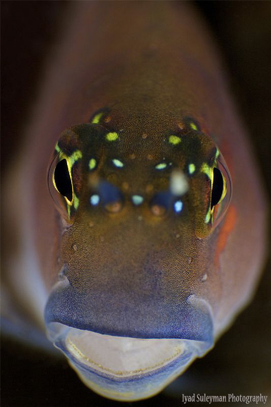 Blenny Portrait by Iyad Suleyman