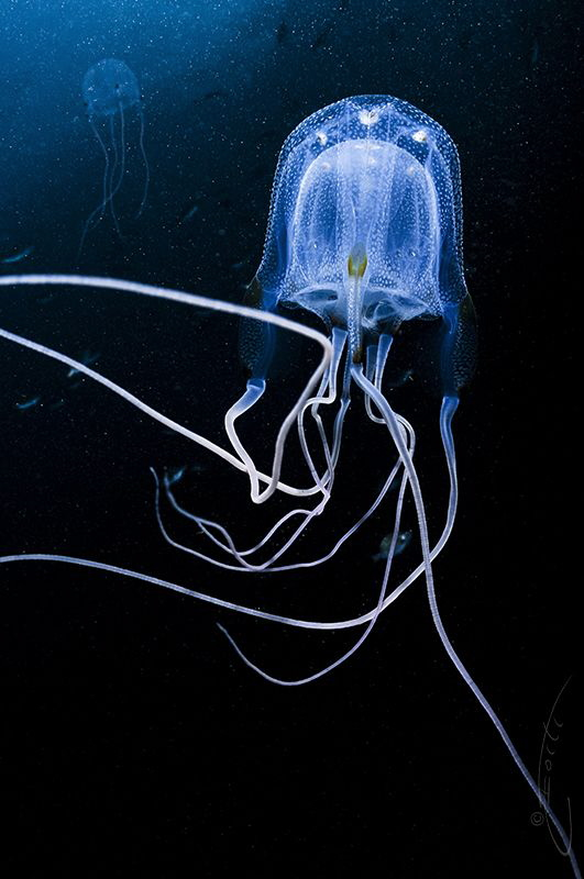 ~ Intimacy ~