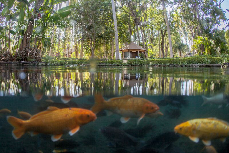 Fishes in the jungle, Las Estacas Mexico by Alejandro Topete