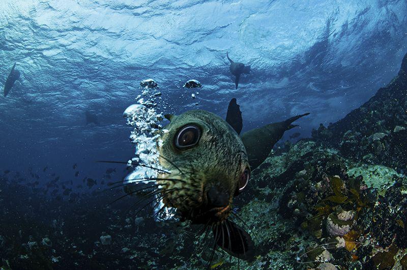 ~ Blowing Bubbles ~ by Geo Cloete
