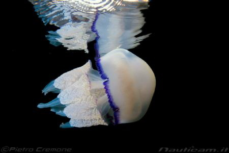 Jelly reflection by Pietro Cremone