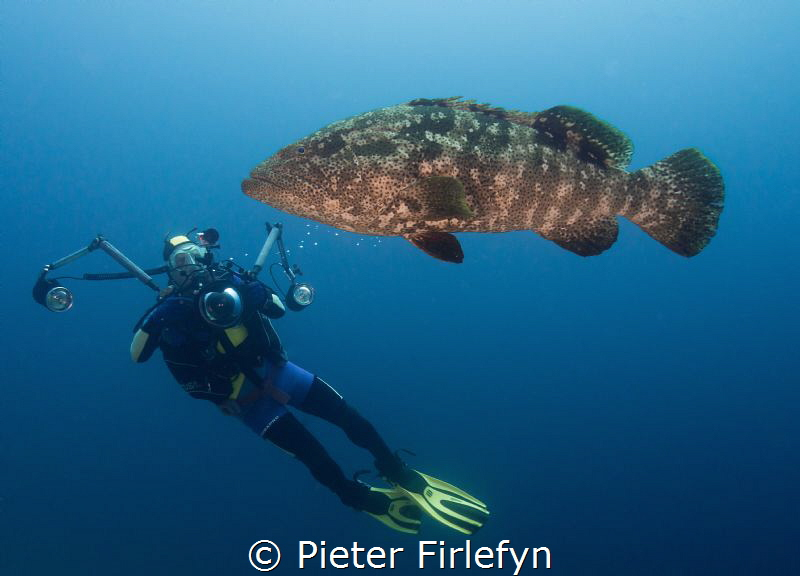 Grouper with model photographer by Pieter Firlefyn