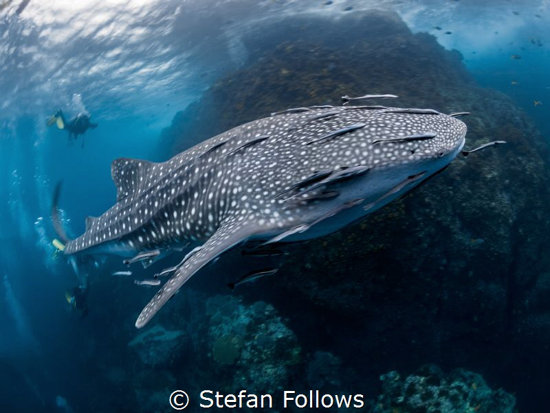 Too Much, Too Soon