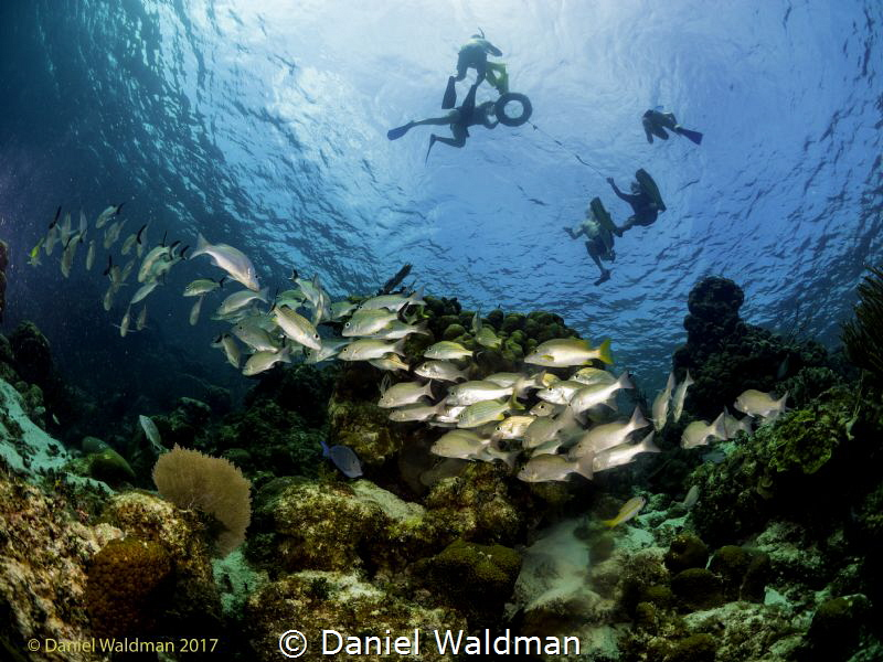 I took a picture of the reef shooting up with 8mil wide a... by Daniel Waldman