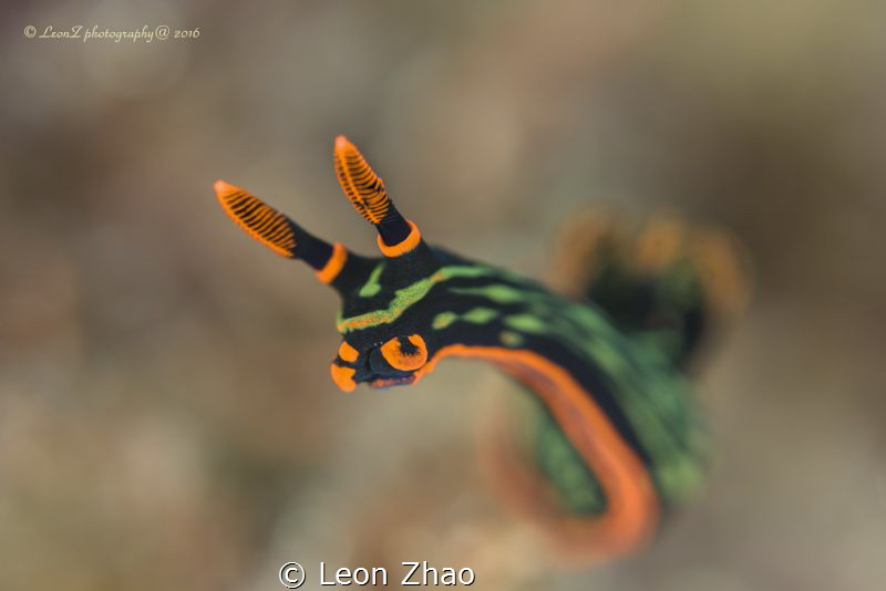 when i dived in Bohol,i was looking for some marco object... by Leon Zhao