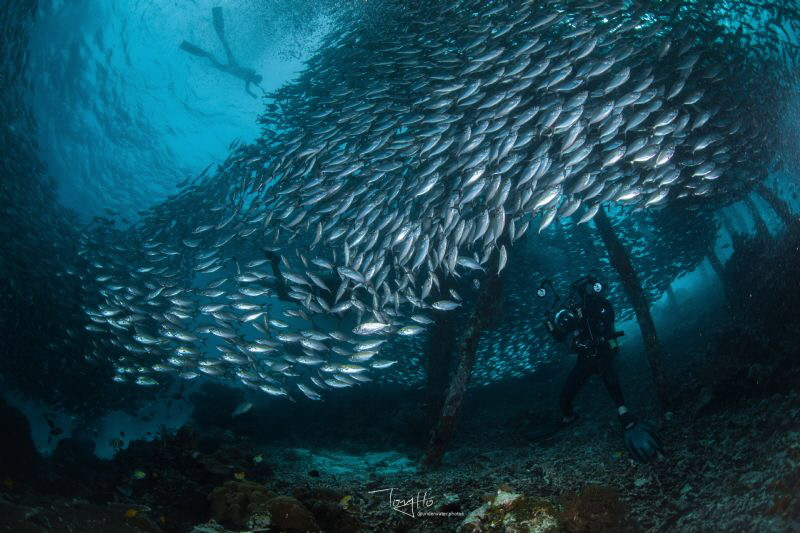 Underwater photographer captures the free latent model de... by Tony Ho