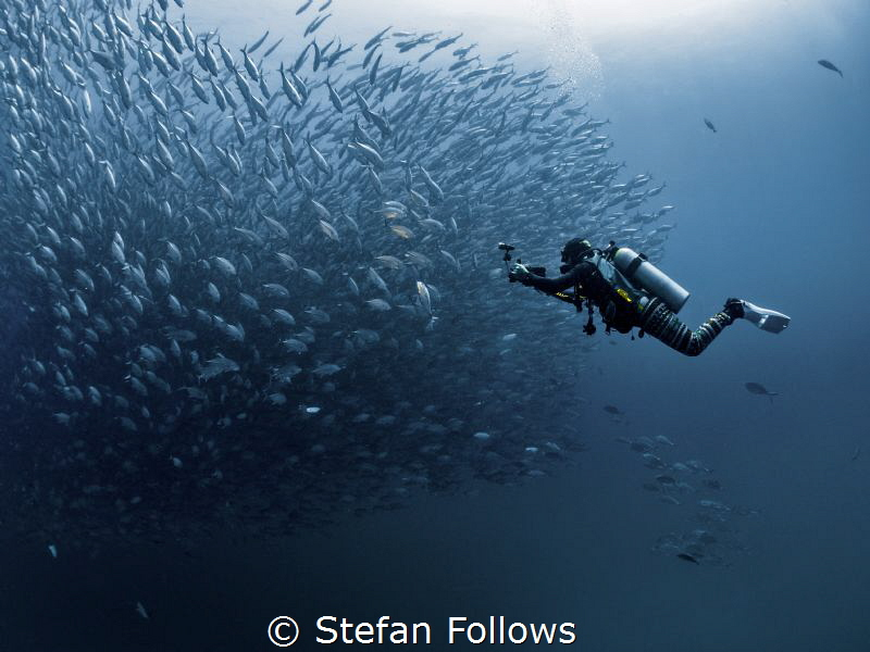Lights, Camera, Action ... !  Big Eye Travely - Caranx ... by Stefan Follows