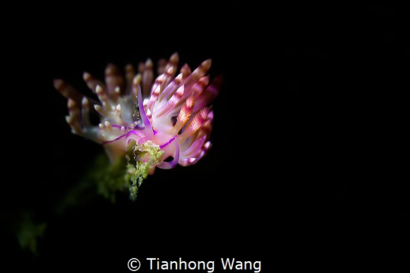 BLOOM