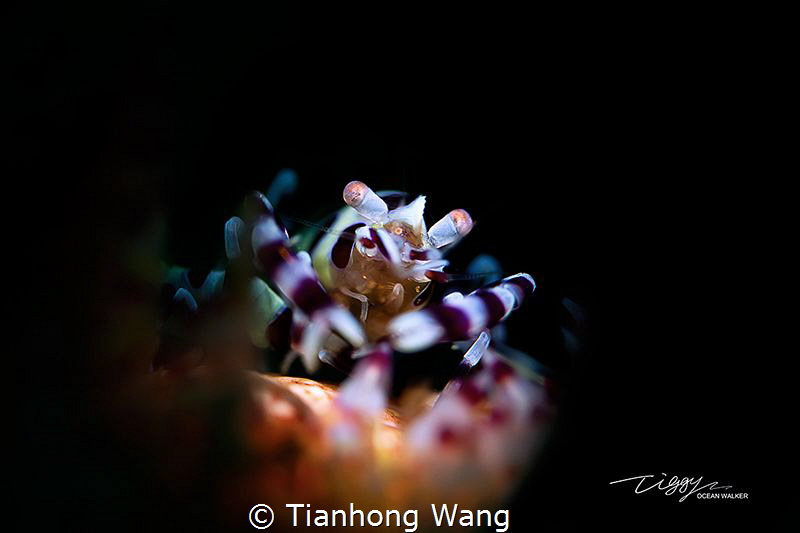 DINE by Tianhong Wang
