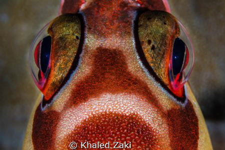 Fisheye Closeup by Khaled Zaki