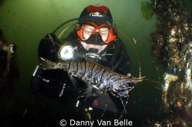 Picture taken in the cold water of the Netherlands by Danny Van Belle
