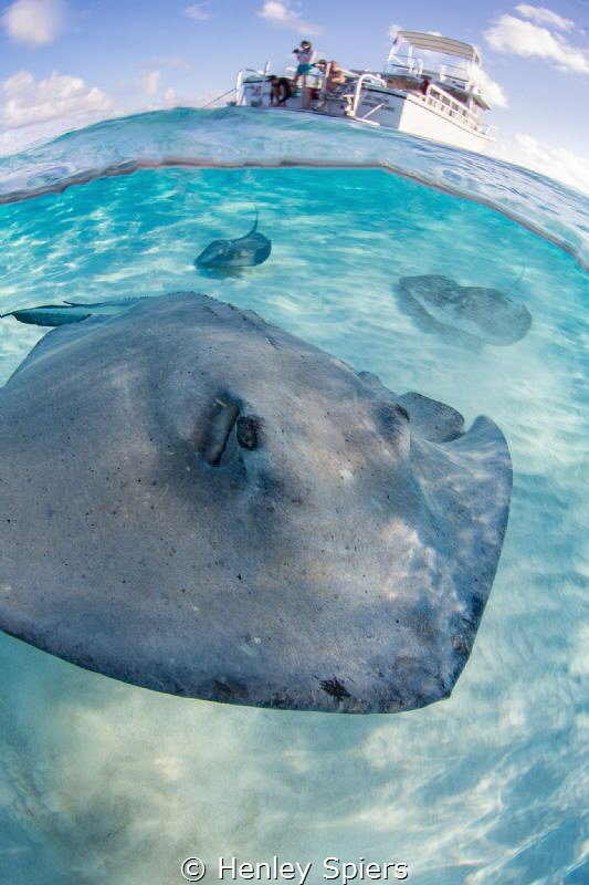 Stingray Crash by Henley Spiers