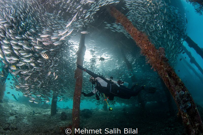 Playing with silverside shoal. by Mehmet Salih Bilal