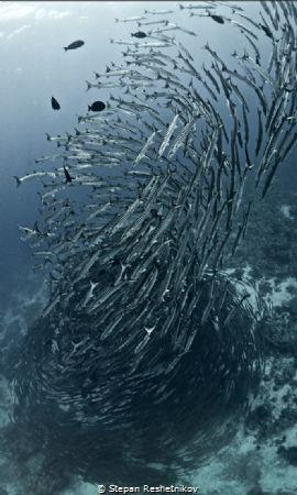 Fish tornado by Stepan Reshetnikov