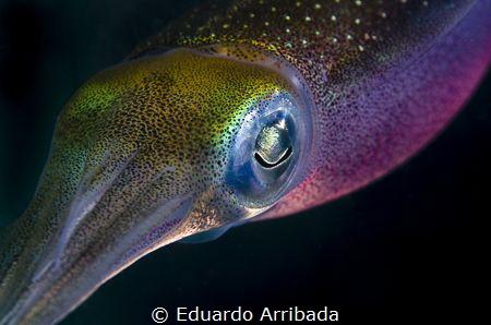 Squid in the dark by Eduardo Arribada